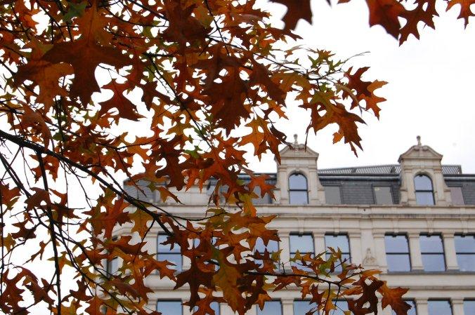 Folhas típicas do outono tomavam conta da cidade, em outubro de 2011. Foto: Débora Costa e Silva