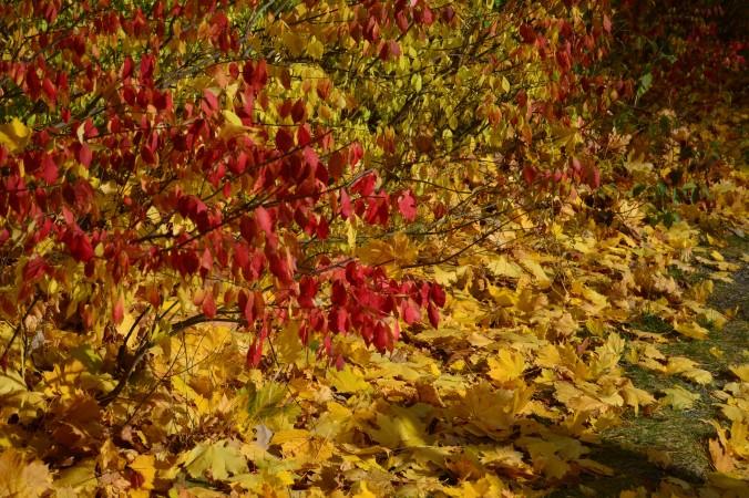 montreal-folhas-do-outono-debora-costa-e-silva
